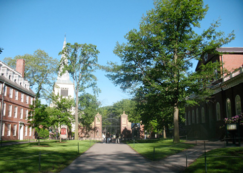 Harvard Yard picture